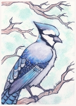 Bluejay - watercolor and pen 5x7